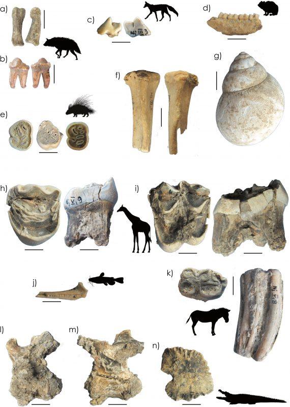 Faunal remains from Njarasa Cave