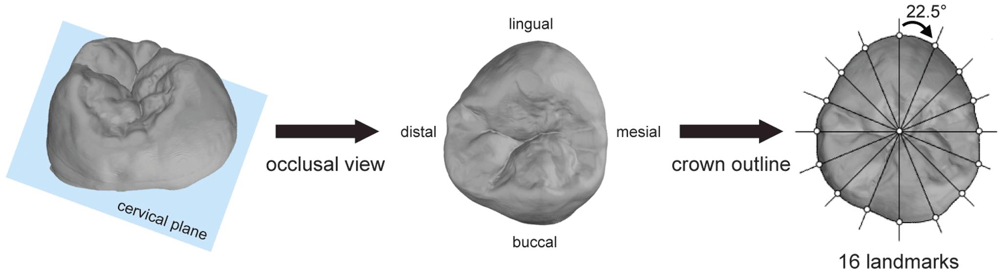 Fig. 2_ Illustration of the method used.
