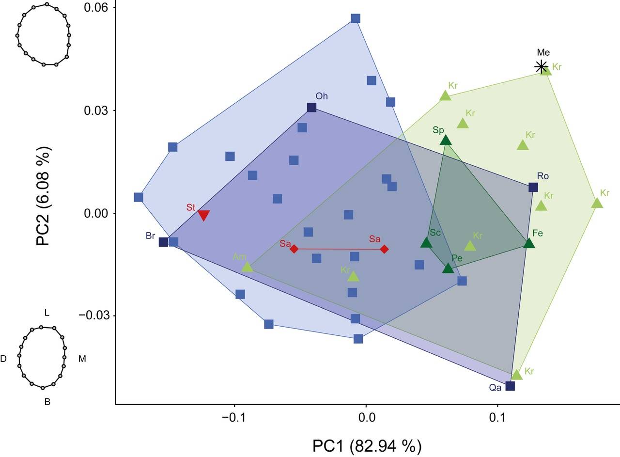 Fig. 5: PCA of the crown outline with PC1 and PC2 projected into form space