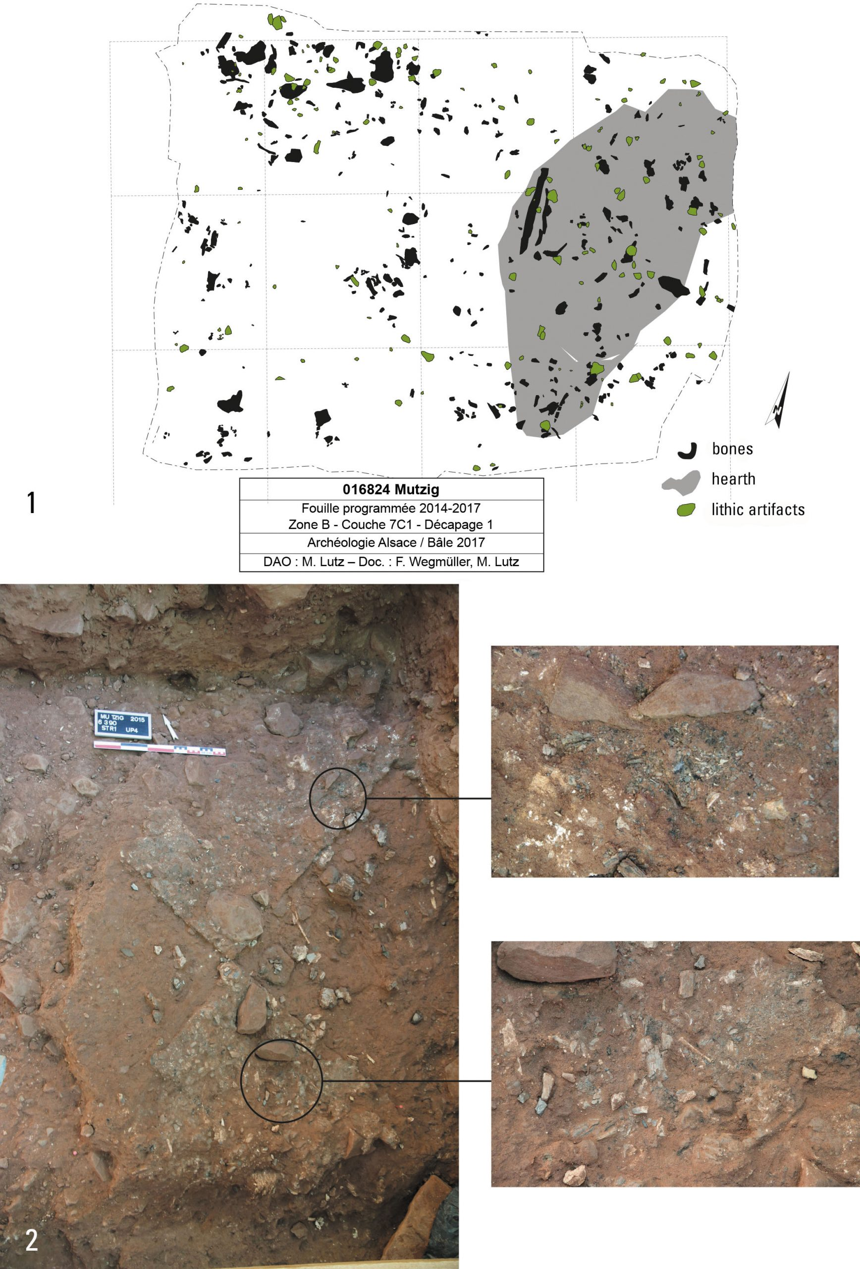 Spatial distribution of remains in layer 7C1 and hearth