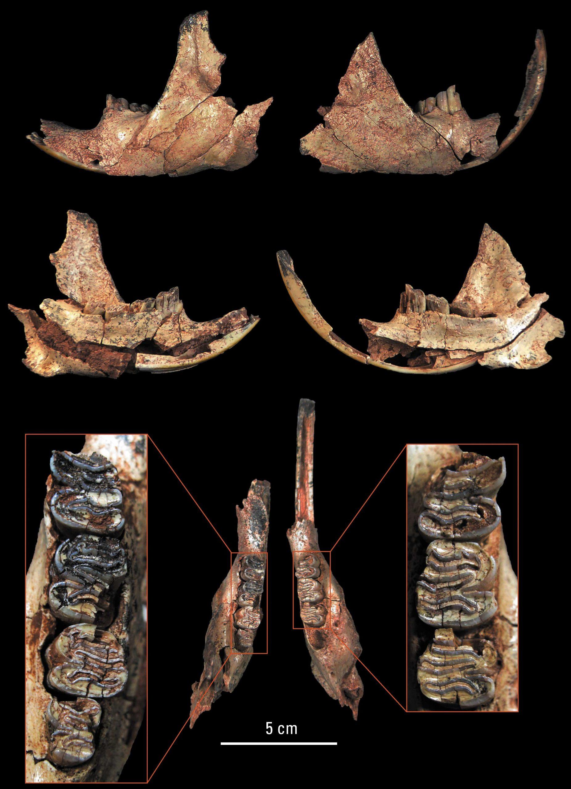 Beaver bones found in Level 9/10